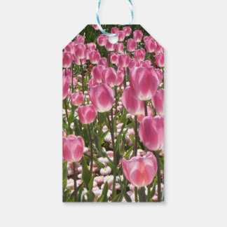 Canberra Tulips Gift Tags