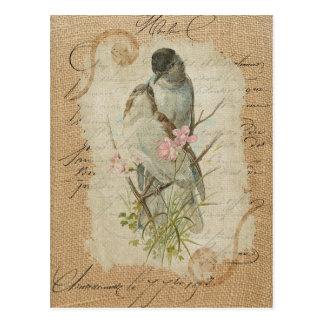 Canción de amor francesa de los pájaros del amor postales