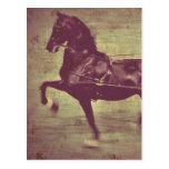 Canción de Saddlebred Postal