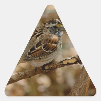 canción del pájaro calcomanía de trianguladas