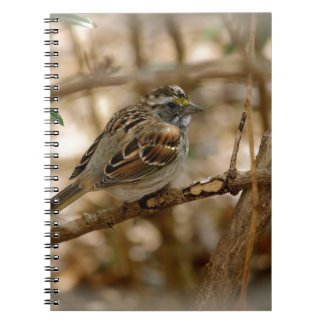 canción del pájaro notebook