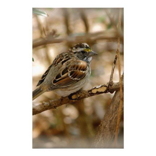 canción del pájaro personalized stationery