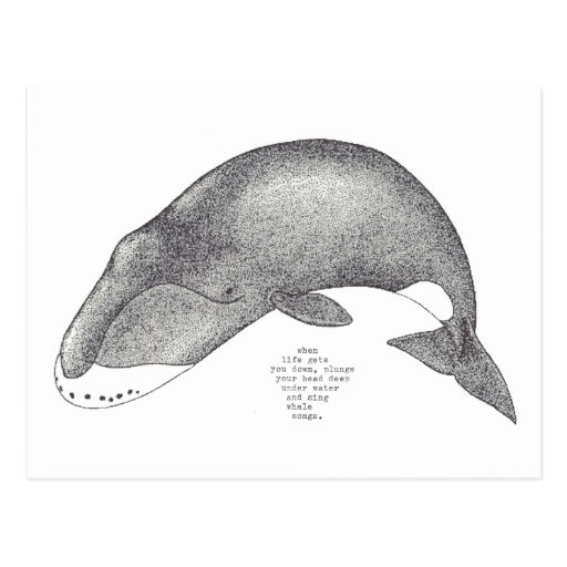canciones de la ballena tarjeta postal
