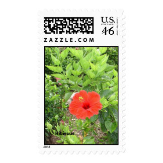 Cancun Hibiscus Stamps