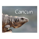 Cancun Mexico Iguana Postcard