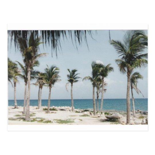 Cancun Palms Postcard