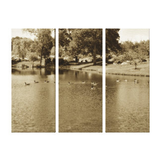 Canda Geese in the Park Pond Canvas Print