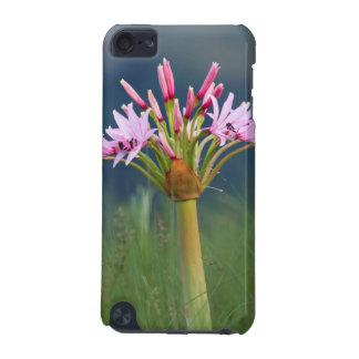 Candelabra Flower (Brunsvigia Radulosa), Umgeni iPod Touch 5G Cases