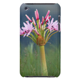 Candelabra Flower (Brunsvigia Radulosa), Umgeni iPod Touch Case