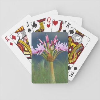 Candelabra Flower (Brunsvigia Radulosa), Umgeni Card Deck