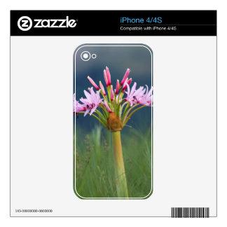 Candelabra Flower (Brunsvigia Radulosa), Umgeni iPhone 4 Decal