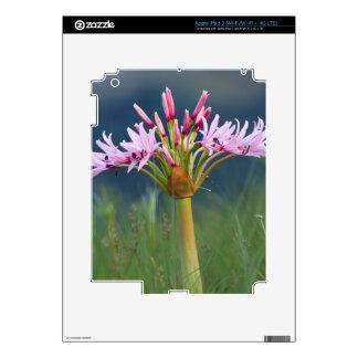 Candelabra Flower (Brunsvigia Radulosa), Umgeni iPad 3 Skins