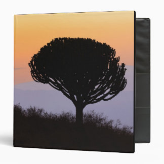 Candelabra Tree silhouetted at sunrise, Binder