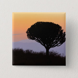 Candelabra Tree silhouetted at sunrise, Button
