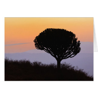 Candelabra Tree silhouetted at sunrise, Card