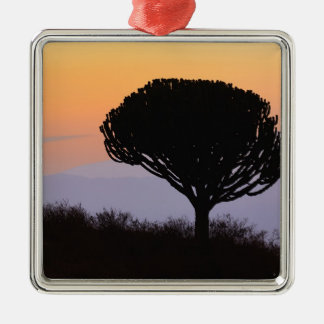 Candelabra Tree silhouetted at sunrise, Metal Ornament