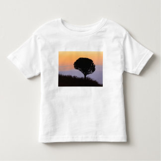 Candelabra Tree silhouetted at sunrise, Toddler T-shirt