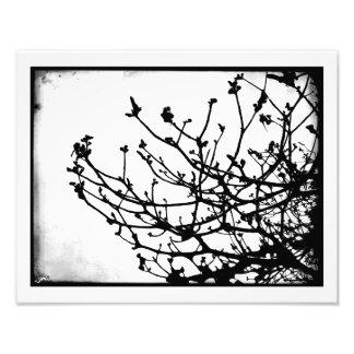 Candelabrum Photo Print