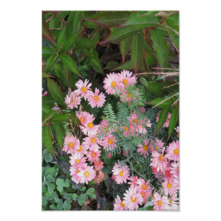 Candian wild garden parks flowers yellow pink rose poster
