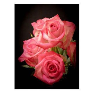 Candlelight Roses Postcard