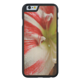 Candy Cane Amaryllis Carved® Maple iPhone 6 Slim Case