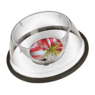 Candy Cane Amaryllis Pet Bowl
