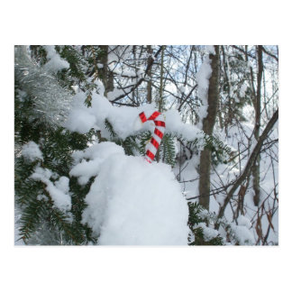 Candy Cane Outdoor Decoration Postcard