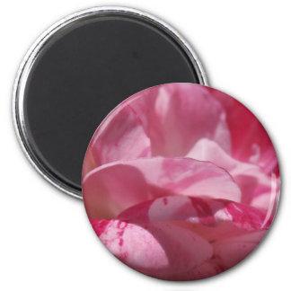 Candy Cane Petals Magnet