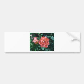 Candy Cane Rose Car Bumper Sticker