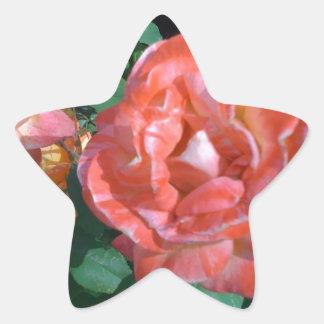 Candy Cane Rose Star Sticker