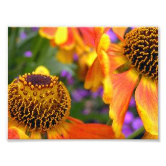 Candy Corn Colors. Photo Print