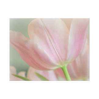 Candy Pink Tulip Gallery Wrapped Canvas