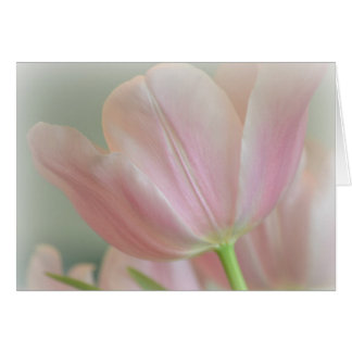 Candy Pink Tulip Card