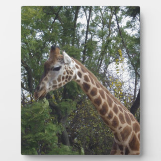 Candy_The_Giraffe,_ Plaque