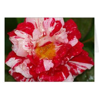 Candystripe Rain Card
