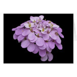 CANDYTUFT ON BLACK greeting card