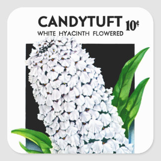 Candytuft Seed Packet Label Square Sticker