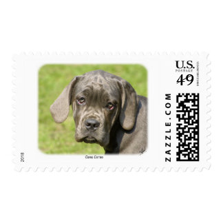 Cane Corso 8R062D-25 Postage Stamp