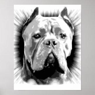 Cane Corso Dog Poster