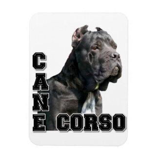 Cane Corso Magnet