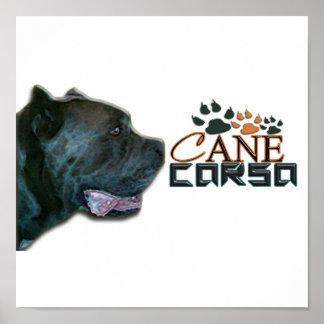 Cane Corso Poster(P) Poster
