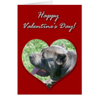 Cane Corso Valentines Day Card