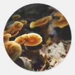 Canela brillante Polypore Pegatina