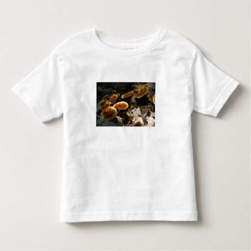 Canela brillante Polypore Tshirts