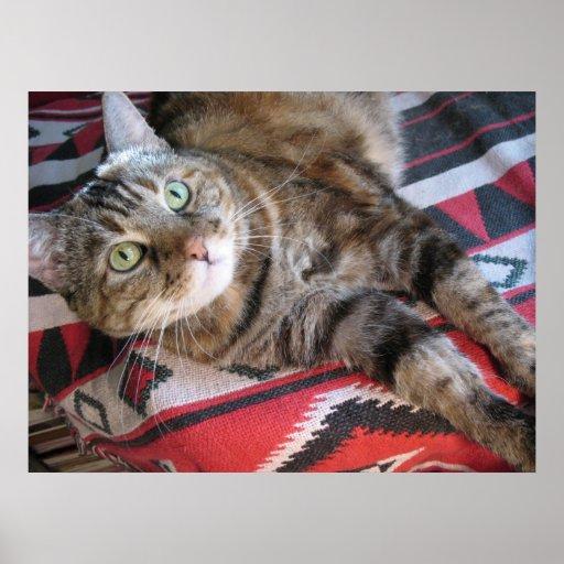 canela el gato en rojo póster