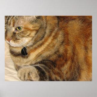 Canela el gato poster