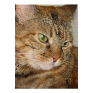 canela el gato posters