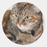 Canela el gato pegatinas redondas
