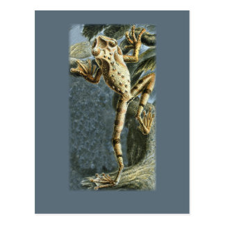 Canelos Treefrog Postcard