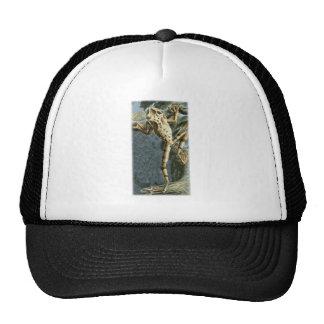 Canelos Treefrog Trucker Hat